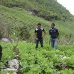 A farmer NGO-scientist synergy in Honduras