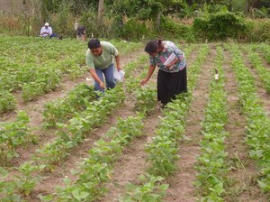 Farmers drive the research agenda in Vallecillos, Honduras. Photo: Omar Gallardo
