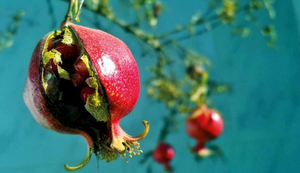 Pomme grenade seeds in Asia