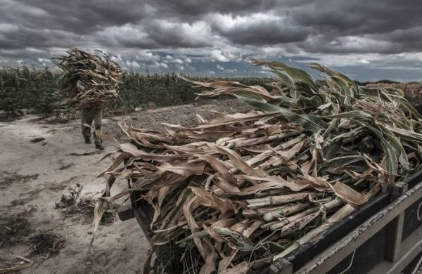 Call for articles: Climate resilient food systems