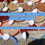 Strengthening farmer-led seed systems