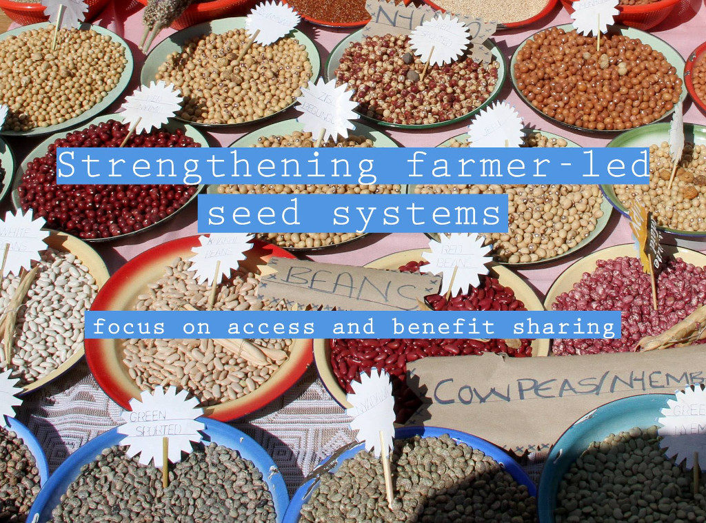 Strengthening farmer-led seed systems