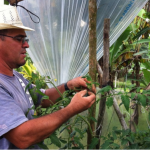 Improving access to vegetable seeds for resilient family farms in Costa Rica