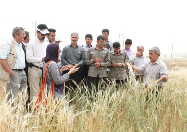 Evolutionary populations: Living gene banks in farmers' fields in Iran