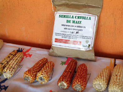 Farmer seed production is an effective form of technology transfer. Guatemala. Photo: Gea Galluzzi