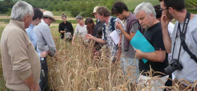 Examining wheat during a field trip in France. Photo: Réseau Semences Paysannes