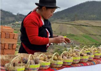 A great variety of potatoes in the Andes. Photo: Kaat van Ongeval/ EkoRural