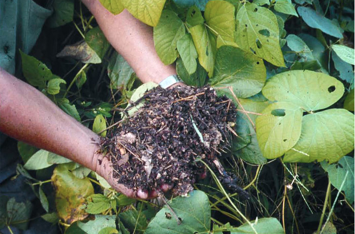 Perspectives: Restoring our soils by learning from history