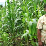 Call for articles: Women and agroecology