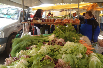 Participatory certification in Brazil supports local food systems