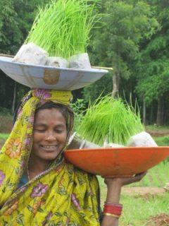 Photo: Sabarmatee Tiki