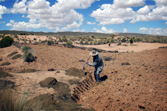Traditional fallows support resilient farming on semi-arid sandy soils