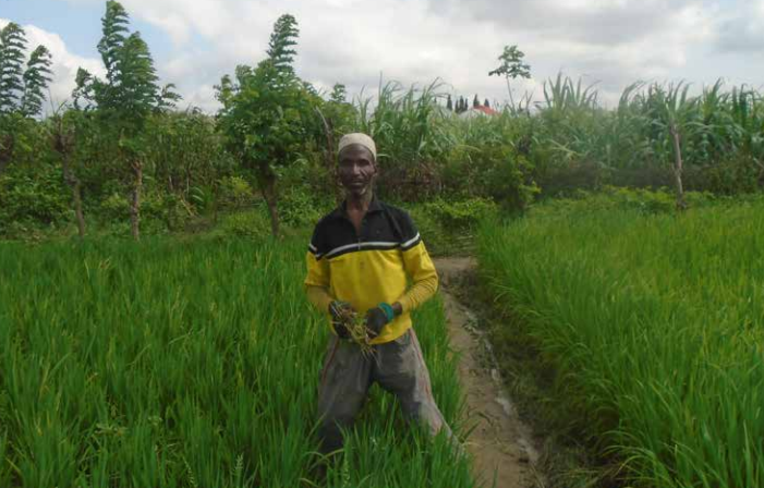 Besides diversifying their crops, farmers reduce the amount of herbicides they are using. Photo: Ahmed Inusa Adamu