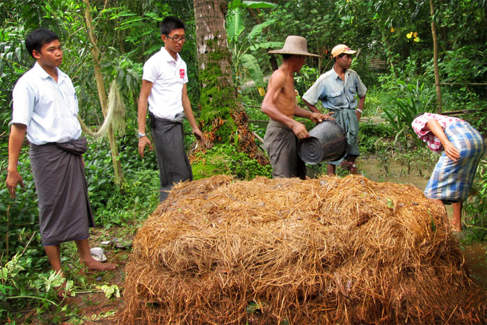 In 8-12 weeks, the straw from a hectare of paddy can produce 2.5 tonnes of good quality compost. Photo: U Kyaw Saing