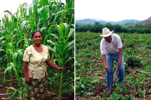 Agro-ecological approaches to enhance resilience to climate change