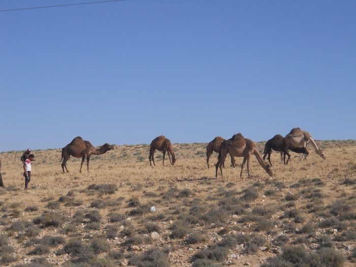 Building the Arab Pastoralist Communities Network