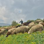 Local solutions for forcibly confined flocks in Palestine
