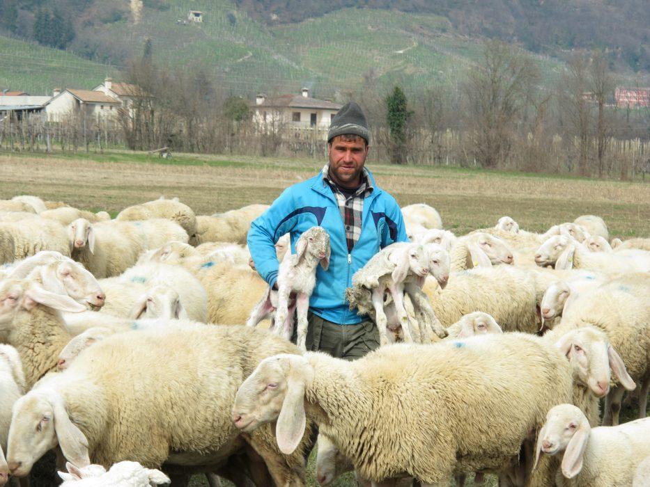 Migrant shepherds sustain pastoralism in the Mediterranean